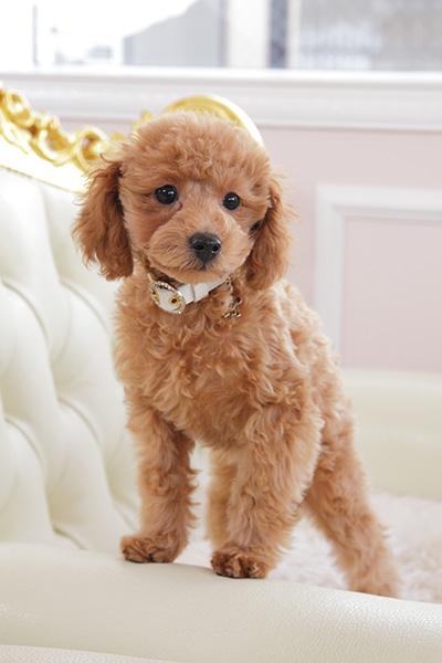 犬 首輪 かわいい