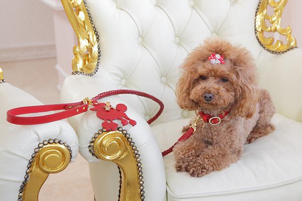 犬 リード かわいい