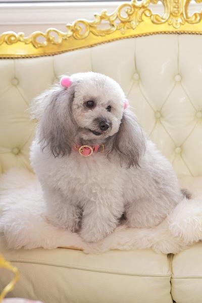 犬 首輪 かわいい ピンク