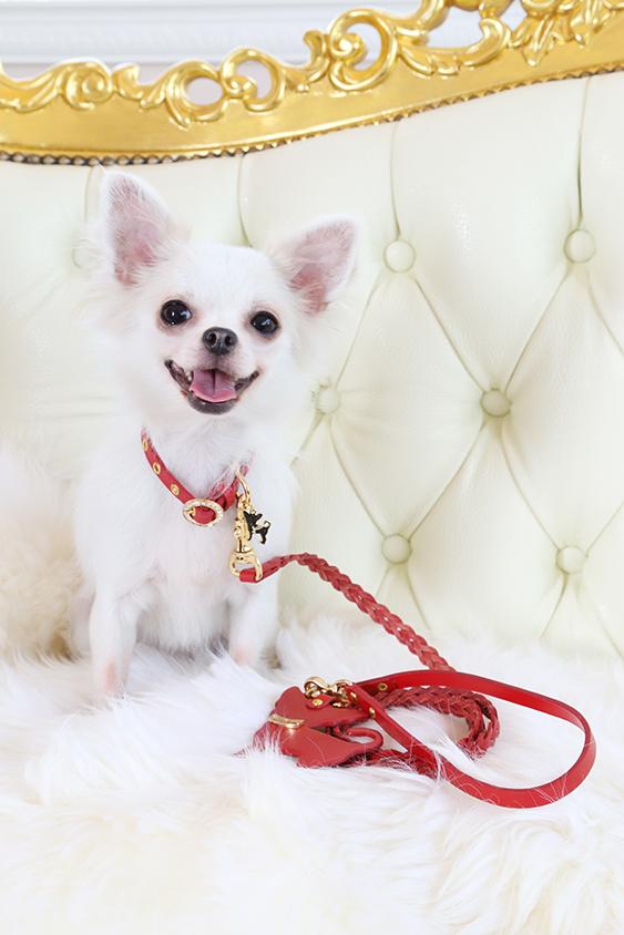 Charlotte レッド モデル犬着用