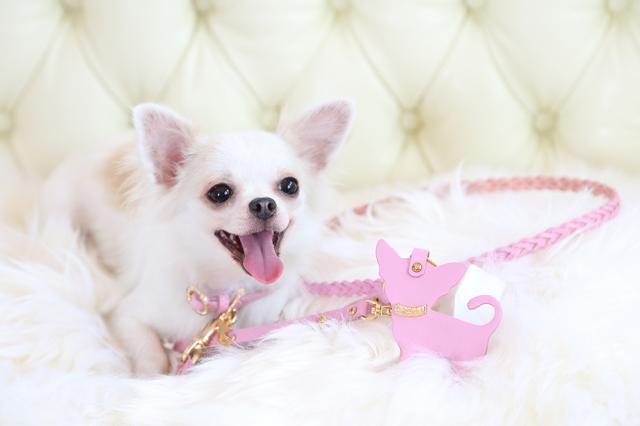Charlotte ピンク モデル犬着用