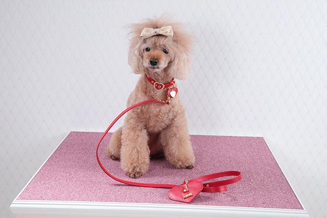 犬 首輪 かわいい ハート