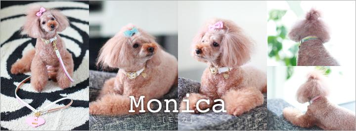 犬 リード 首輪 かわいい monica