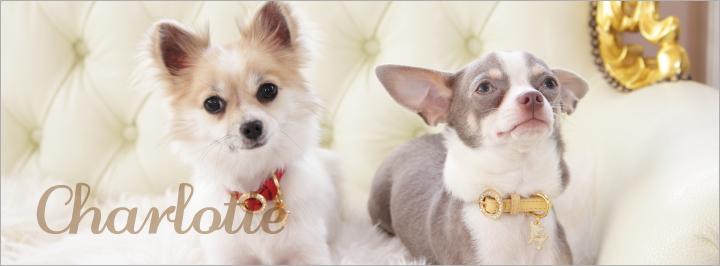 リボン 犬 リード 首輪 通販 シャーロット