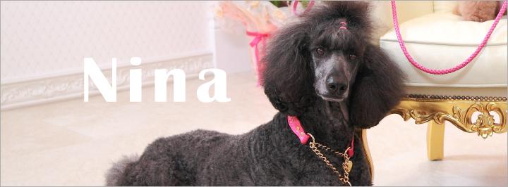 リボン 犬 リード 首輪 通販 ニナ ニーナ